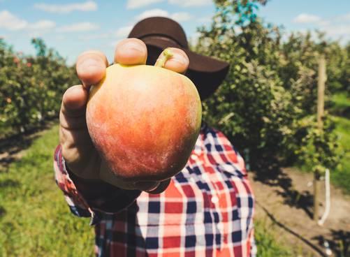 Boeren en telers