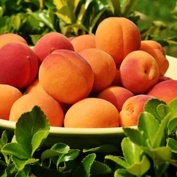 specialité_apricots_pixabay.jpg